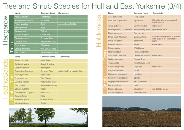 HEYwoods Tree and Shrub species - page 3