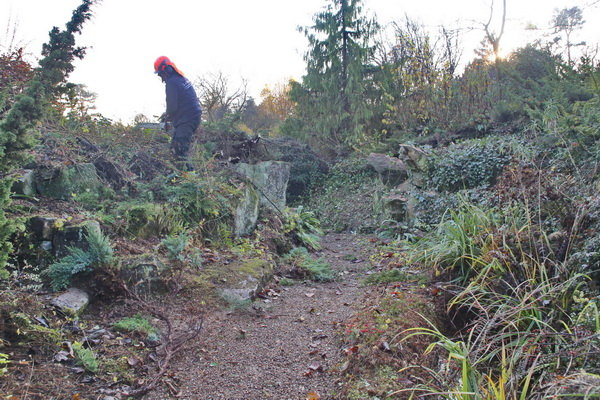 Clearance work for the rock garden restoration has begun!