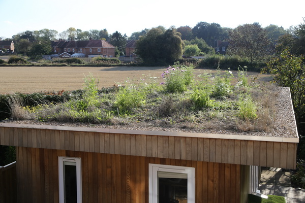 Green roof 2018-10