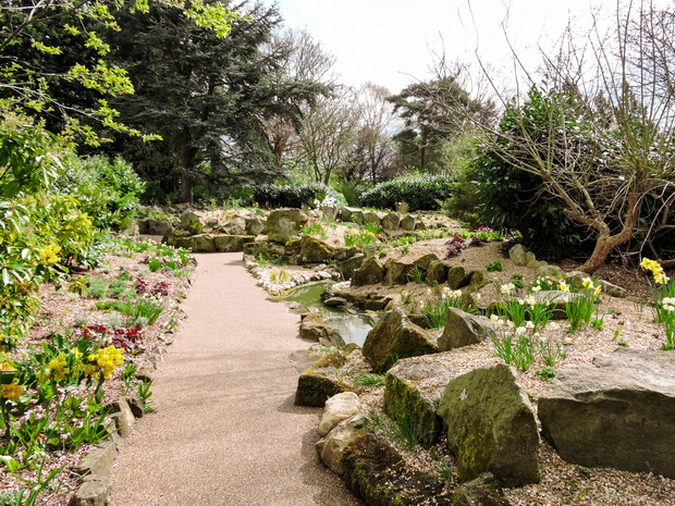 Rockery in the spring